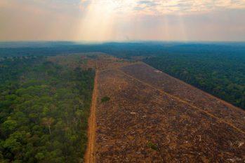 Desmatamento na Amazônia brasileira pode contribuir para surto de casos. Foto: Divulgação/ InfoEscola