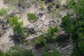 Na decisão do ministro, os desmatadores não serão obrigados a reflorestar áreas degradadas. Foto: EBC