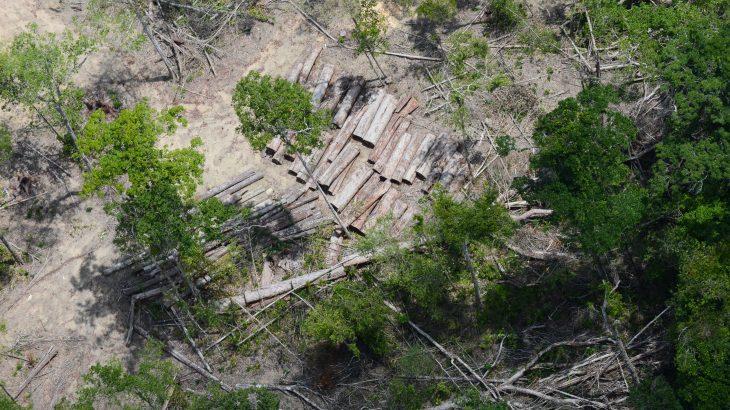 O plano formaliza uma meta de redução do desmatamento e das queimadas ilegais aos níveis médios registrados entre 2016 e 2020 pelo Prodes, sistema do Inpe  (Reprodução/EBC)