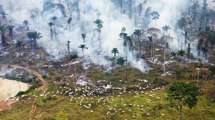 Um estudo publicado pela ONG Climate Action Tracker estima que as emissões de CO2 das atividades industriais e da queima de combustíveis fósseis fiquem entre 4% e 11%, abaixo das de 2019 - foto: divulgação/ Greenpeace