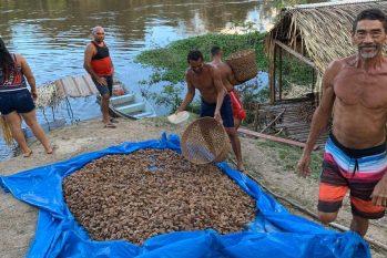 Município de Tapauá, no AM, terá usina de castanha-do-Brasil