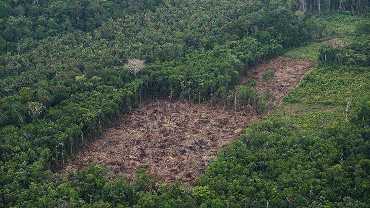 Os dados ainda apontam que 254 km² de floresta foram derrubados no último mês (Divulgação/ Greenpeace)