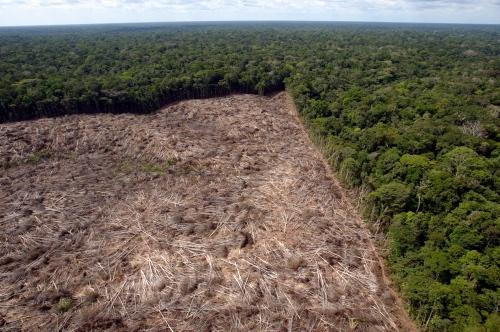 Dados do Instituto Nacional de Pesquisas Espaciais (Inpe) mostram que o desmatamento na Amazônia tem atingido níveis críticos. (reprodução/internet)