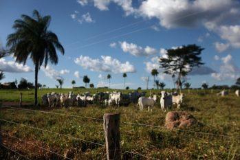 A pecuária pode ser uma aliada no desenvolvimento econômico da Amazônia, segundo avaliação de orgaõs como a Embrapa (Reprodução/Yahoo Notícias)
