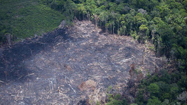 Atividades econômicas não podem ser desenvolvidas nas áreas identificadas pelo projeto Amazônia Protege, segundo recomendação emitida em março, sem resposta até o momento (Reprodução/GreenPeace)