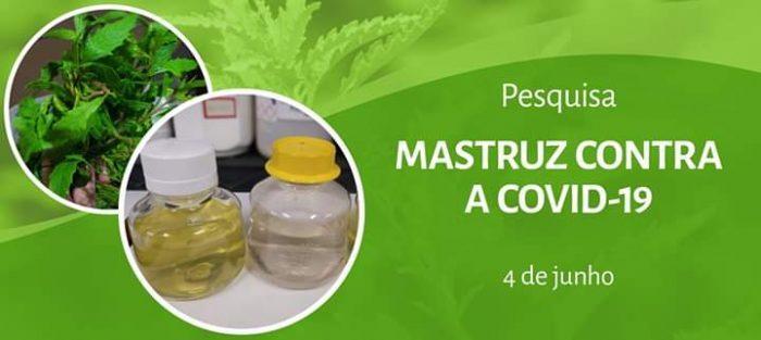 A decisão de investigar o mastruz partiu de relatos, mundialmente conhecidos, de que a planta tem efeitos benéficos contra doenças respiratórias.  (Divulgação)