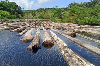 No acumulado de 2020 já foram recolhidos 2.648 metros cúbicos de madeira. (Divulgação/PM-AM)