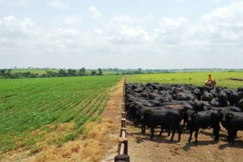 Soja está entre os principais produtos exportados, além de carnes, produtos derivados de animais, madeira, algodão e minérios. (Divulgação/ internet)