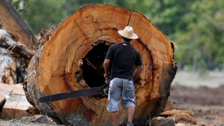 Os investimentos do Fundo Amazônia foram responsáveis, em parte, pela contenção do desmatamento até 2018 (Ricardo Oliveira/Revista Cenarium)