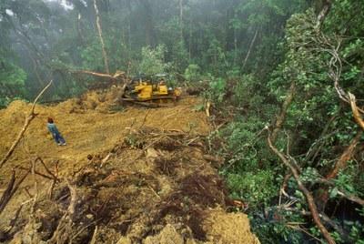 Entre outras determinações judiciais, Funai e Incra deverão considerar terras indígenas em processo de demarcação no Sistema de Gestão Fundiária  e no Sistema de Cadastro Ambiental Rural (Divulgação)