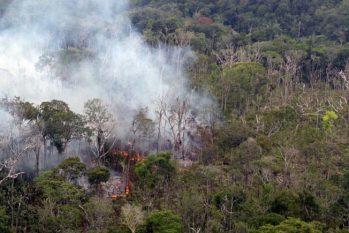 Dados levantados pelo MapBiomas também mostram que metade dessa vegetação, 44 milhões de hectares, foi destruída na Amazônia. (Ricardo Oliveira/ Revista Cenarium)