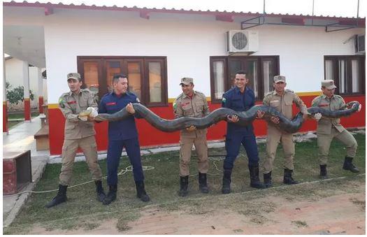 Animal foi capturado na tarde da sexta-feira, 28, na zona rural de Sena Madureira, no Acre (Divulgação)