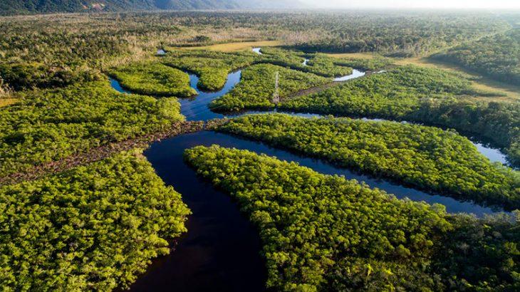 Painel intergovernamental  solicita implementação de recomendações para conservação e desenvolvimento sustentável da Amazônia (Reprodução/Internet)