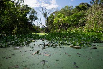 Importância do evento é visibilidade e o tema é conservação dos recursos hídricos da Amazônia (Reprodução/FAS)