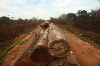 Neste ano, Operação Verde Brasil 2 já contabiliza 28 mil metros cúbicos de madeira ilegal apreendida. (Ricardo Oliveira/Revista Cenarium)