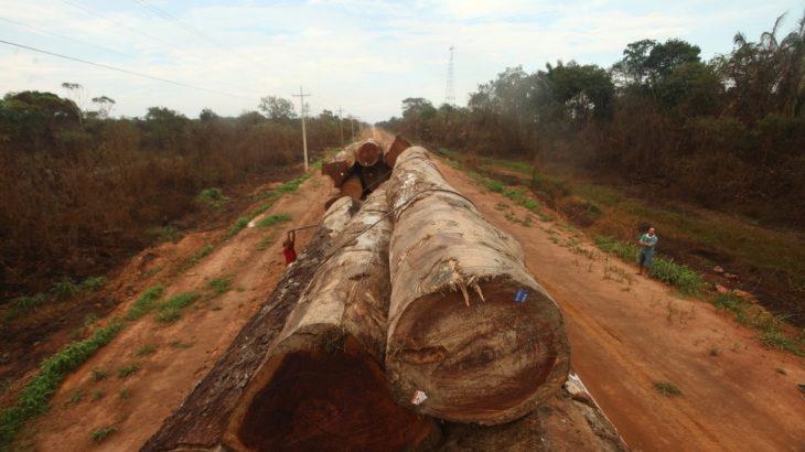 Apreensão de madeira ilegal aumenta em operações militares contra  desmatamento na Amazônia - Revista Cenarium
