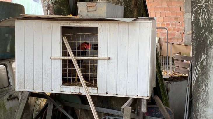 Polícia encontrou 80 animais silvestres e domésticos que foram encaminhados para abrigos (Divulgação/PC-AM)