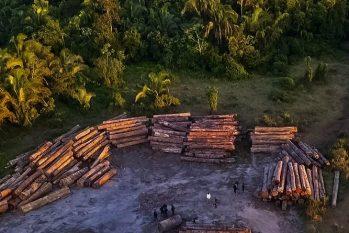 O ambientalista diz que é possível testemunhar uma regressão nas políticas socioambientais no Brasil nos dois últimos anos. (Reprodução/Internet)