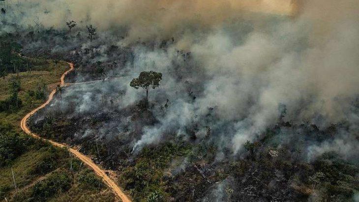 Cooperação técnica entre os MPs tem sido uma importante ferramenta para a efetiva fiscalização no desmatamento e degradação do meio ambiente nos Estados da Amazônia legal.  (Victor Moriyama/ Greenpeace)