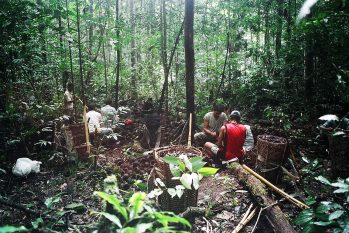 PL que autoriza exploração sustentável agora segue para sanção do governador Wilson Lima (PSC) (Reprodução/Pedro Martinelli)