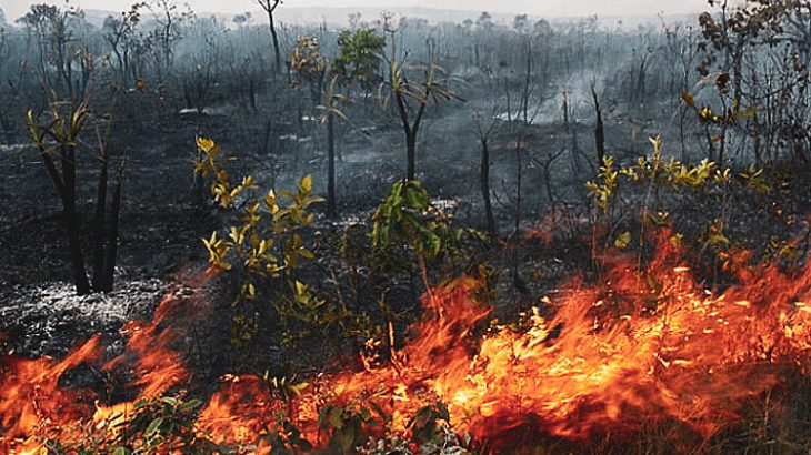 Estudo indica que pavimentação pode trazer consequências graves a floresta (Reprodução/Internet)