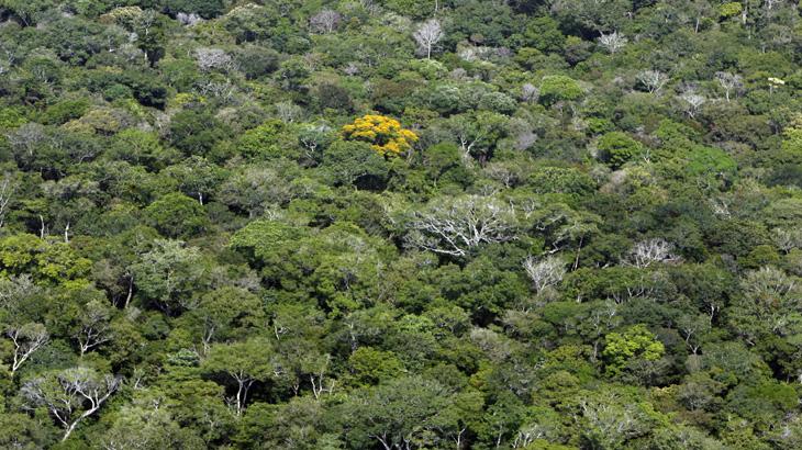 Tapete verde do Brasil