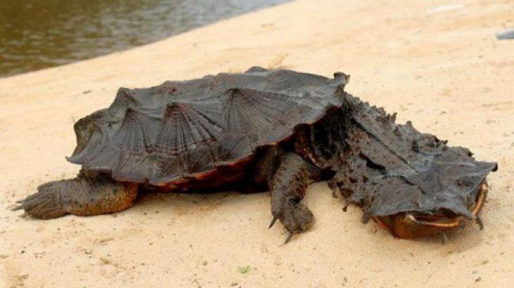 No mundo amazônico, o que não faltam são animais estranhos que chamam atenção pela aparência e hábitos (Reprodução/Internet)