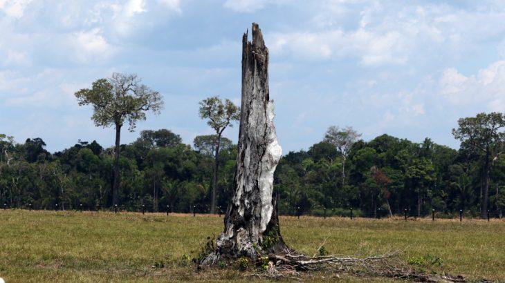 Segundo AGU, danos ambientais atingiram 35 mil hectares de floresta. (Ricardo Oliveira/Revista Cenarium)