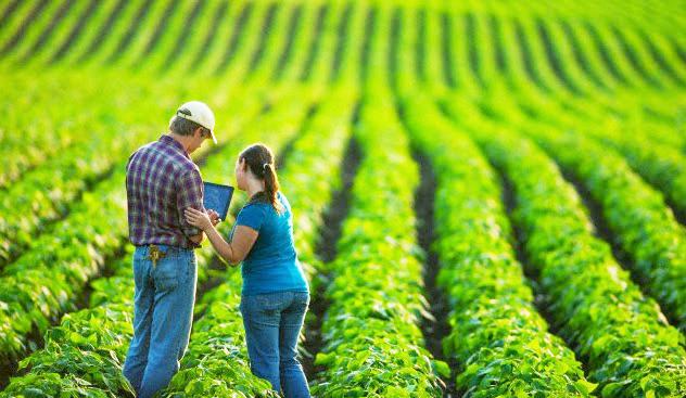 o setor de agronegócio é responsável por 22% das riquezas geradas por ano no País (Reprodução/Internet)