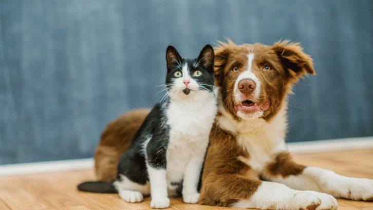 A mutilação de animais pode levar a pena de dois a cinco anos de detenção, além de multa e proibição de guarda (Reprodução/Internet)