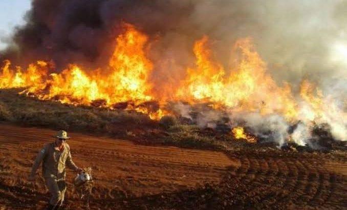 Em agosto, chamas já haviam devastado o maior refúgio mundial de araras-azuis (Reprodução)