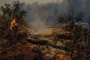 De janeiro à primeira quinzena de setembro deste ano, o Pantanal teve mais de 2,9 milhões de hectares atingidos pelo fogo, segundo o Centro Nacional de Prevenção e Combate aos Incêndios Florestais (Prevfogo) (Reprodução/Internet)