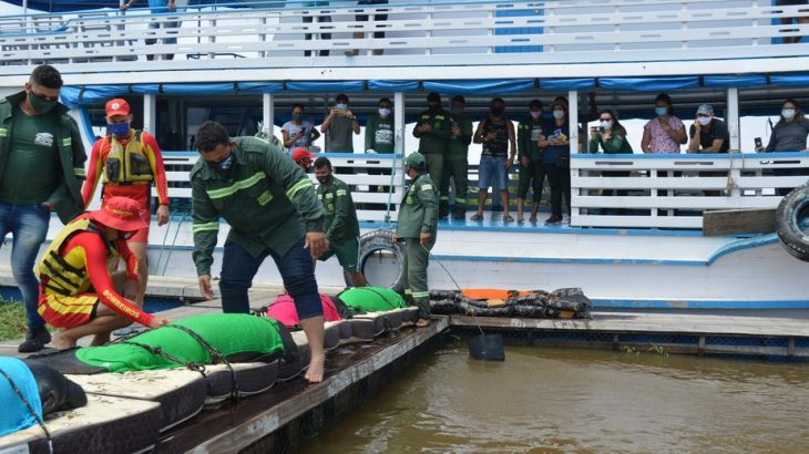 Peixes-bois são transferidos de zoológico em Santarém, no Pará, para piscinas naturais no rio Amazonas