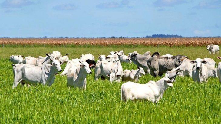 Quase 40% do setor agropecuário brasileiro é exportado para a China (Reprodução/ Internet)