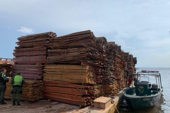Illegal wood from deforestation in the Amazon (Divulgation / PM)