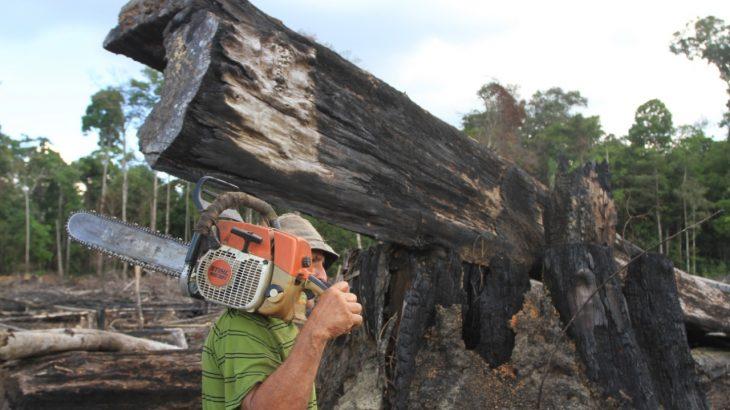Levantamento do Instituto Imazon registrou um desmatamento de 890 km² no mês, um crescimento de 49% em relação a outubro de 2019 (Ricardo Oliveira/Revista Cenarium)