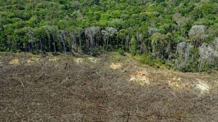 A análise foi feita pela ONG ICV (Instituto Centro de Vida) com base nos dados do Prodes, programa do Inpe (Instituto Nacional de Pesquisas Espaciais) que disponibiliza taxas anuais de desmatamento em biomas brasileiros. (Plaucheur/AFP)