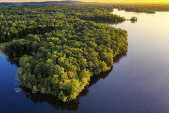 Brasil quer mostrar ações ambientais na COP26 (Reprodução/ Internet)
