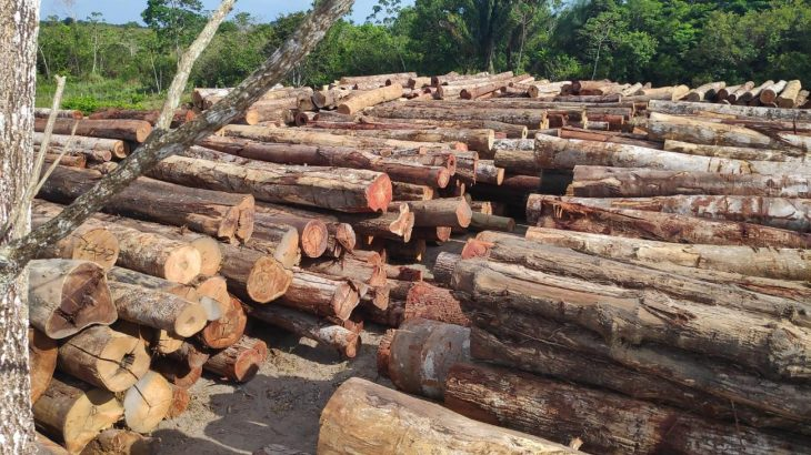 The apprehension of 43,700 logs, which occurred in western Pará, along the Mamuru and Arapiuns rivers is considered the largest in the country's history (Divulgation / Agêncy Pará)