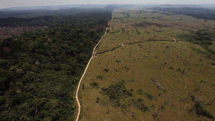 A composição do grupo que analisará a moratória do desmatamento ainda será definida pela Mesa Diretora da Casa (Reprodução/André Penner)