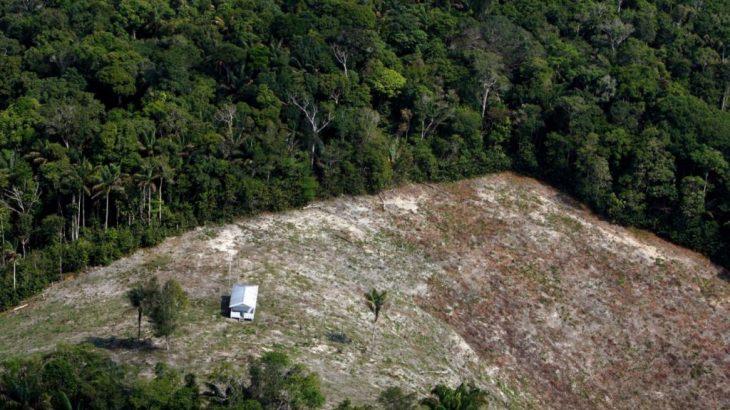 Investigações apontam participação de servidores do instituto em favorecimento à invasão e desmatamento de terras da União por grileiros (Ricardo Oliveira/Revista Cenarium)