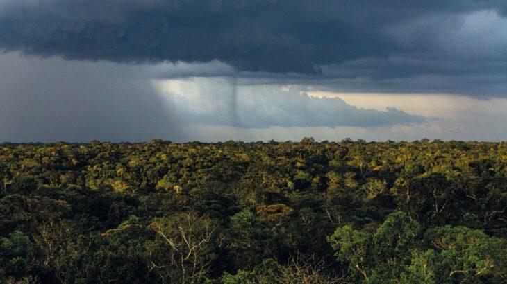 Nuvem de chuva sobre trecho de floresta no estado do Amazonas (Reprodução/ Revista Fapesp)