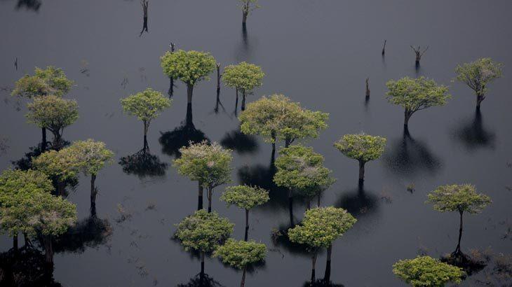 floresta alagada