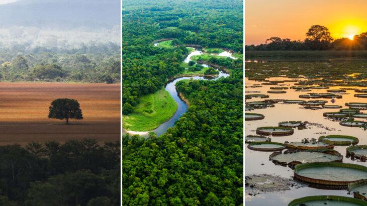 Vegetações dos biomas Cerrado, Pantanal e Amazônia (Reprodução/Internet)