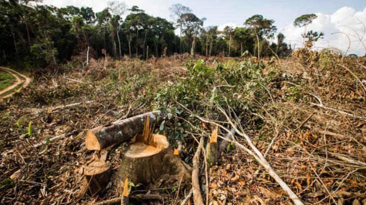 Amapá vem sofrendo com a alta na temperatura devido ao desmatamento e às mudanças climáticas sofridas na região amazônica. (Eduardo Anizelli/ Folhapress)