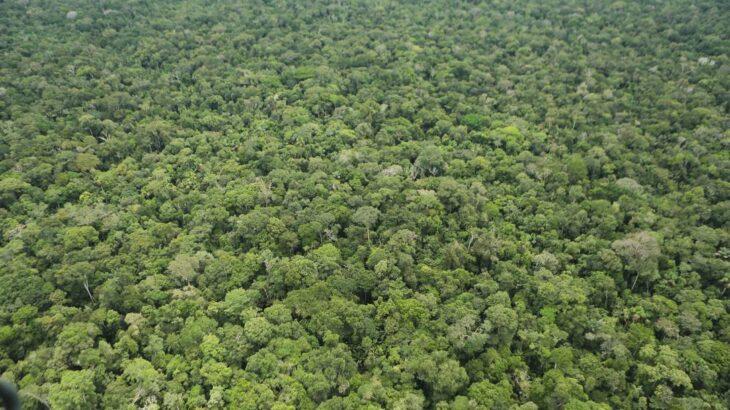 Os recursos devem ser utilizados, entre outras finalidades, para custear o emprego da Força Nacional nas ações de combate ao desmatamento -proposta criticada por ambientalistas (Jorge William/Agência O Globo)