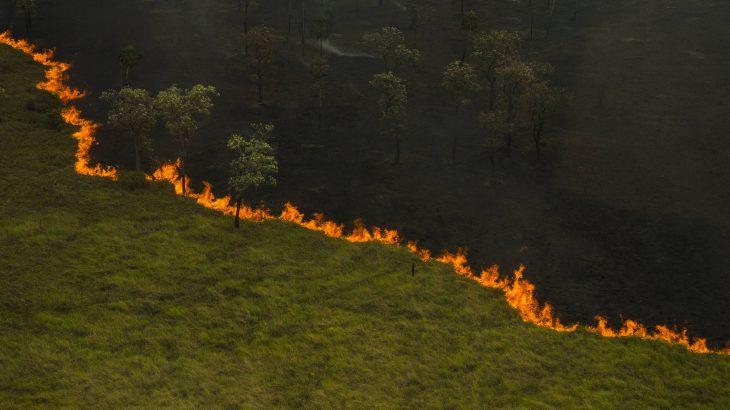 Queimada atinge vegetação no Parque Estadual Pantanal do Rio Negro (João Farkas)
