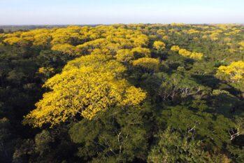 O Complexo de Florestas do Rio Gregório é formado pelas florestas estaduais do Rio Gregório, do Mogno e do Rio Liberdade (Pedro Devani/Agência do Acre)