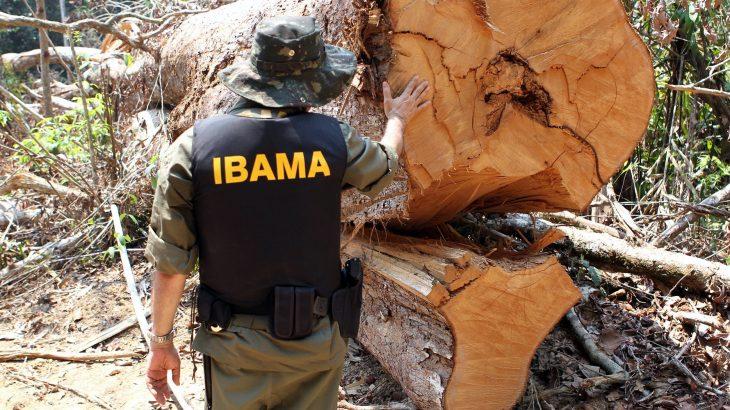 A Polícia Federal narra que, segundo depoimentos de servidores do Ibama, Júnior foi removido pelo agente da Abin para a área de licenciamento, sem prévia comunicação (Reprodução/Ibama)