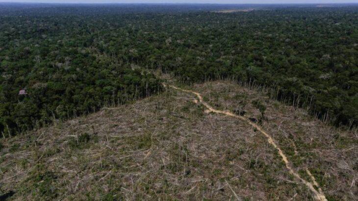 Área desmatada foi de 580 km² e quantidade de alertas foi a maior para o mês (Reprodução/Infoglobo)